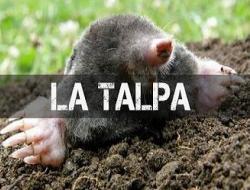 Conosci il tuo nemico rimedi efficaci e naturali per for Talpe in giardino