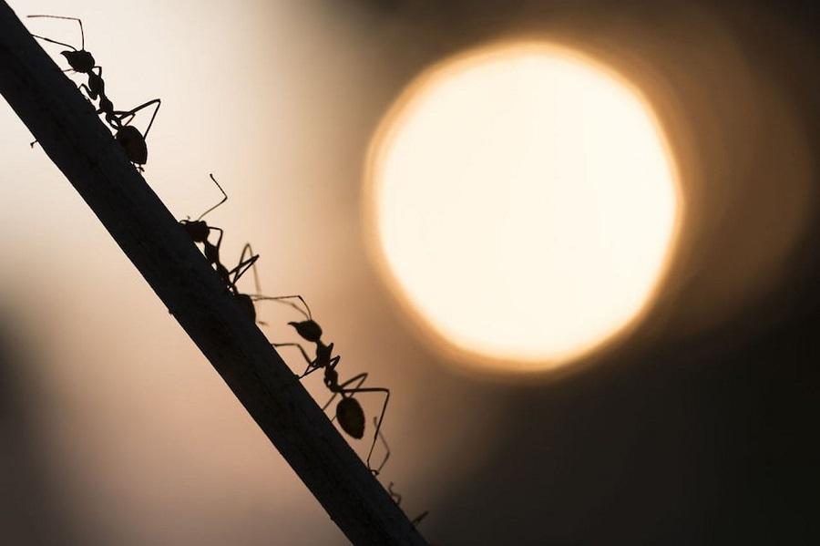 Le formiche invadono casa tutti i rimedi naturali per - Rimedi per le formiche in casa ...