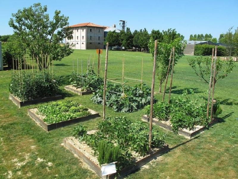 L 39 orto in giardino consigli per una coltivazione - L orto in giardino ...